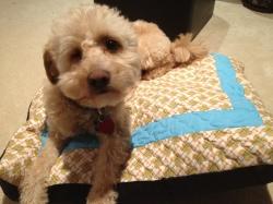 Dog bone bed