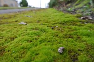 Mossy Walk 14th