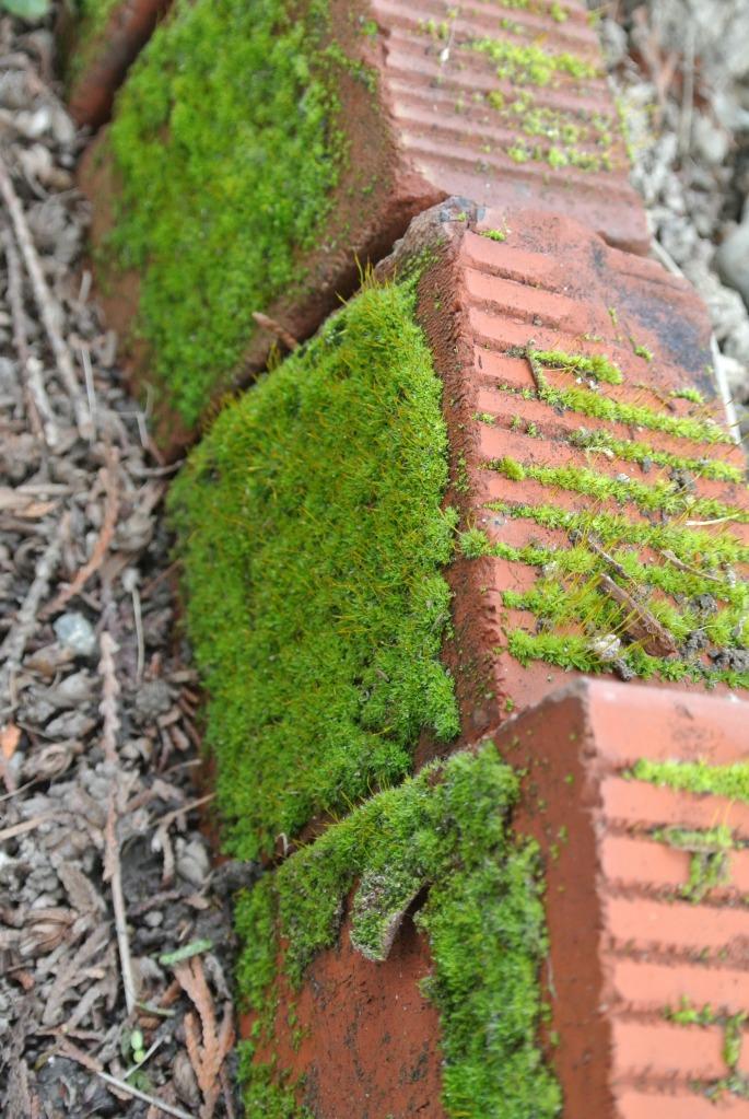 Mossy Walk 16th