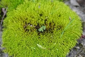 Mossy Walk Urchin