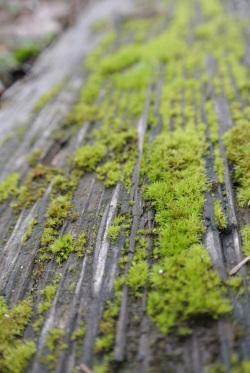 Mossy Walk Ties