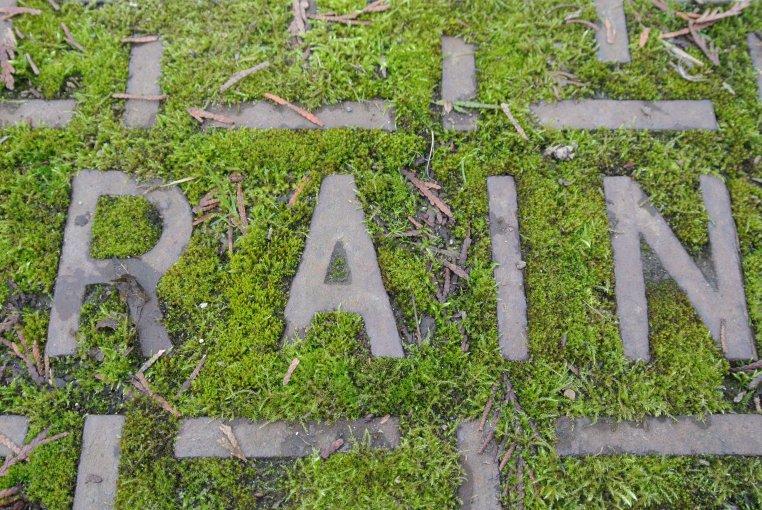 Mossy Walks Drain on 15th