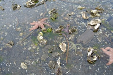 Can you see the four starfish?