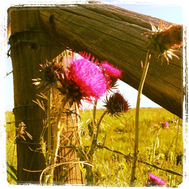 Love dirt road runs - Home is where the thistle growns???