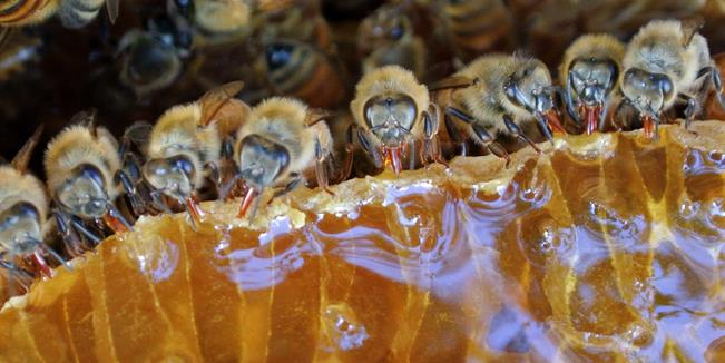 090613_0435_BeekeepingP1.jpg